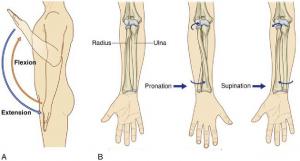 mouvements coude 300x161 - Micro-pauses actives - pour les douleurs aux coudes, aux poignets & aux mains