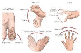 mouvements poignets et mains - Micro-pauses actives - pour les douleurs aux coudes, aux poignets & aux mains